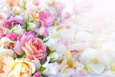 Roses sfondo fiori Archivio Fotografico - 25126127