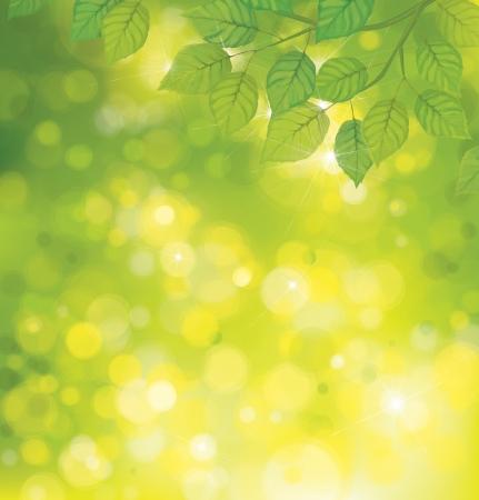 Vector green leaves on sunshine background  Vector
