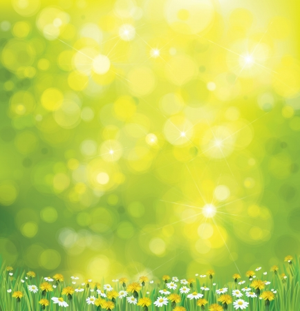Vector sunshine background with chamomile and dandelion  Illustration