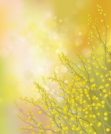 mimosa: Vector mimosa flowers on spring background