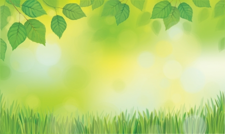 Vector green leaves branches and grass on sunshine background  Çizim