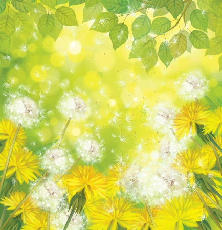Vector spring background with yellow dandelions  Vector