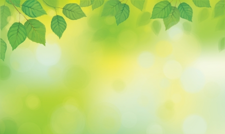 sunshine background: Vector green leaves  branches on sunshine background