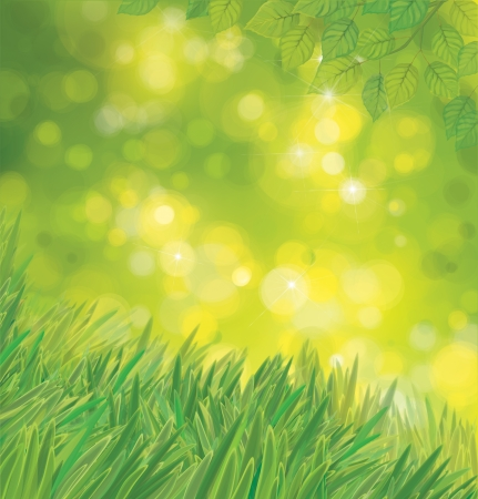 Vector green leaves  and grass on sunshine background  Illustration