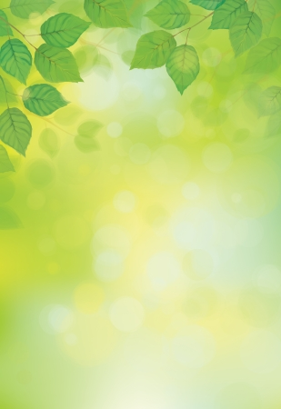 Vector green leaves on sunshine background  Illustration