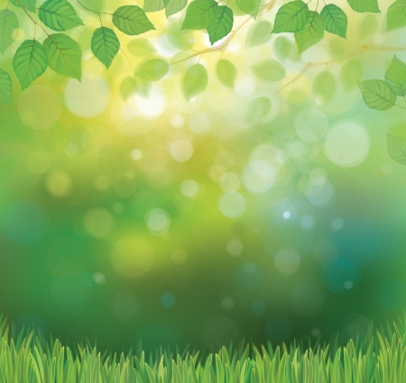springtime: Vector green leaves branches and grass on sunshine background  Illustration