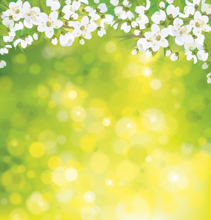 apple blossom: Vector blossoming tree on spring background.