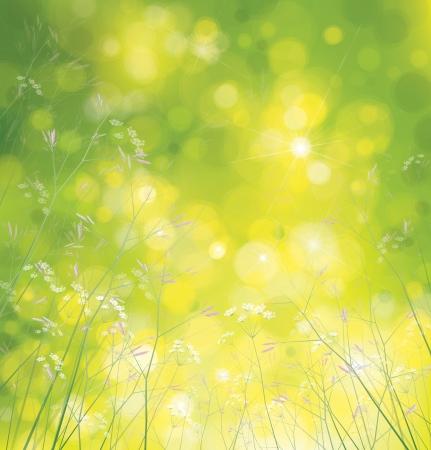 yellow wildflowers: Vector wildflowers background