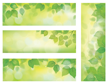 birch: nature banners, branch of birch tree with green leaves on spring    Illustration