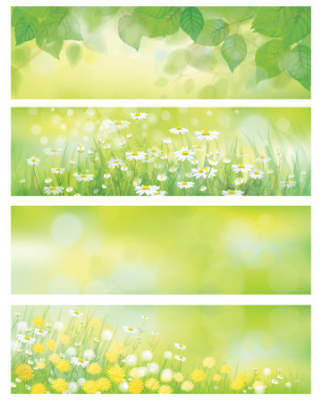 Vector spring nature banners, birch tree leaves, dandelion and chamomile