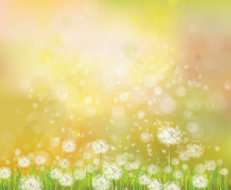 sunshine background: Vector sunshine  background with white dandelions