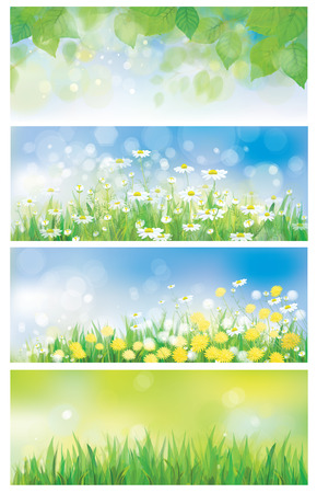 Vector spring nature banners, birch tree leaves, dandelion and chamomiles  Çizim