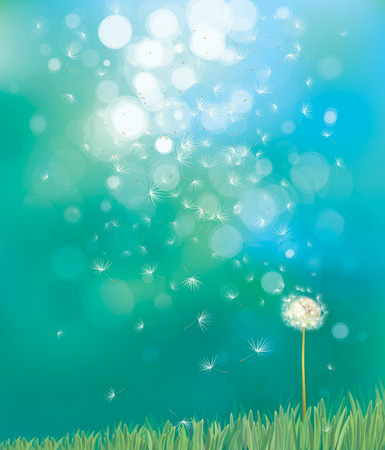 dandelions: Vector of spring background with white dandelion