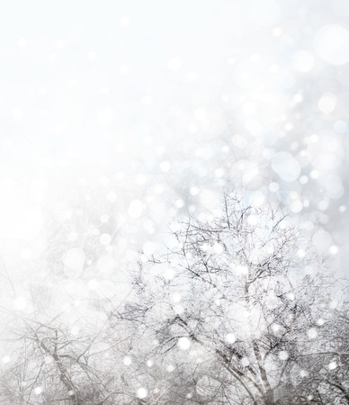 Winter  nature background  with trees and snowfall