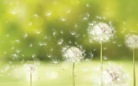 흰 민들레와 벡터 봄 배경 일러스트