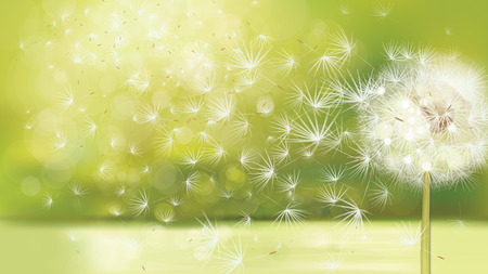 Vector spring background with white dandelion. 일러스트