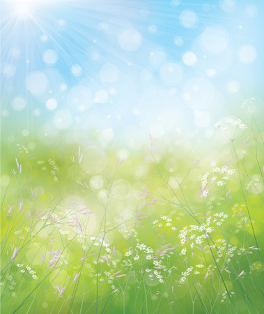 wildflowers: Vector spring nature background. Illustration