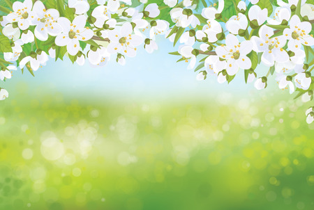 blossoming: Vector spring blossoming tree on bokeh background.