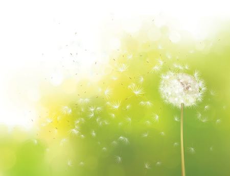 Vector spring bokeh background with white dandelion.