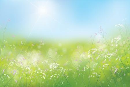 fiori di campo: Primavera Vector sfondo floreale. Vettoriali