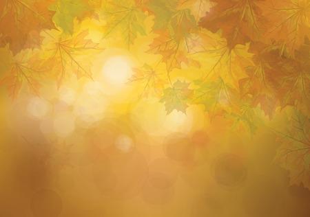 golden border: Vector autumnal leaves on bokeh background.