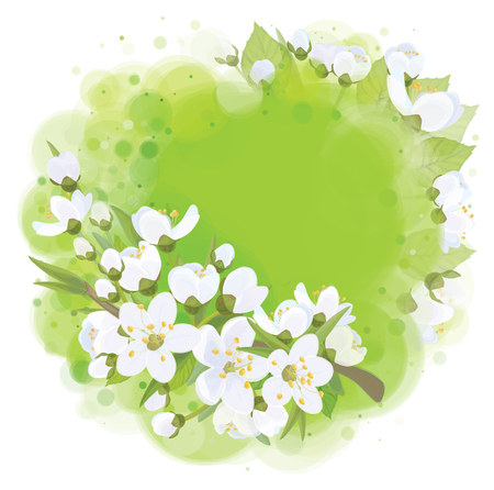 apricot tree: frame of spring blossoming background.