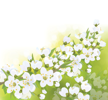 blossoming: Vector spring blossoming tree  background.