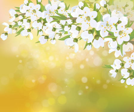 blossoming: Vector blossoming branches of apple  tree, spring background. Illustration