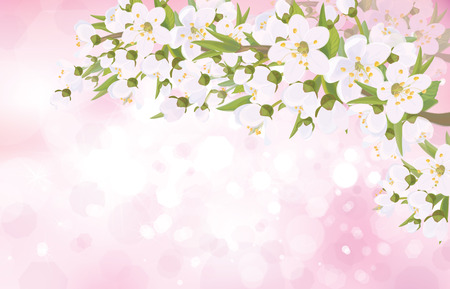 apricot tree: Vector blossoming tree branches on bokeh pink background. Illustration