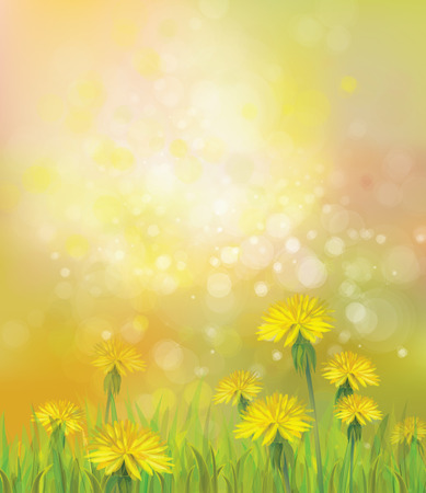 flowers bokeh: Vector of spring background with yellow dandelions.