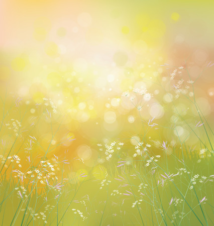 flowers bokeh: Vector spring  nature background.