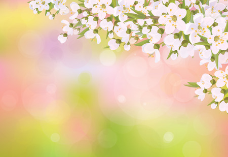 Vector blossoming branches of cherry tree, spring background.