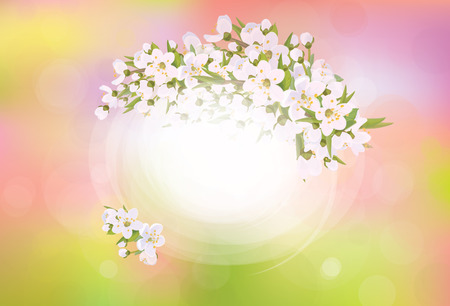 apricot tree: Vector frame blossoming cherry tree, spring background. Illustration