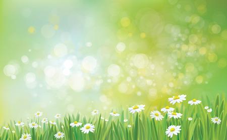 campo de flores: Vector fondo de la naturaleza con la hierba y manzanillas.