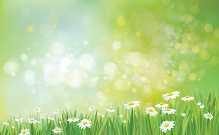 chamomile flower: Vector nature background with grass and chamomiles.