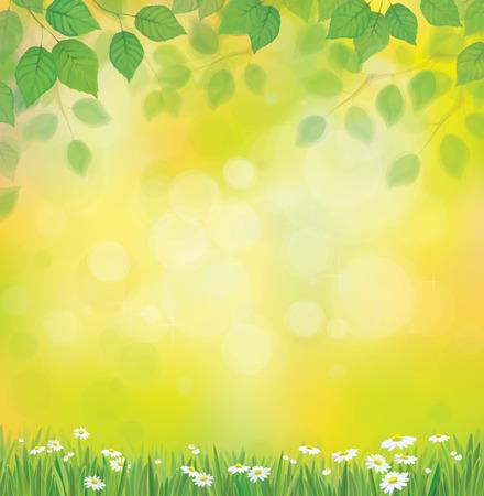 sol radiante: Vector de sol de fondo con la manzanilla y diente de león. Vectores
