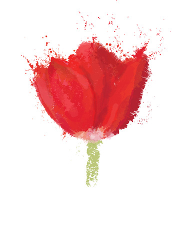 red tulip: Vector red  tulip isolated.