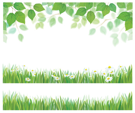 Vector spring birch tree leaves, grass and daisy flowers  borders isolated.