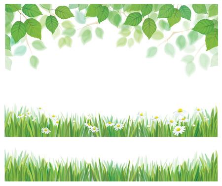 Vector albero primavera di betulla foglie, erba e Margherita fiori confini isolati. Archivio Fotografico - 37145144