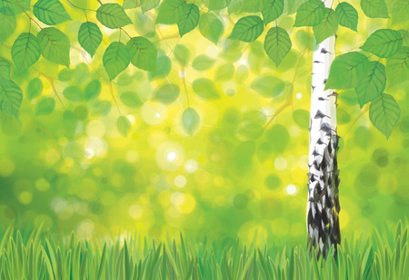 Vector birch tree on spring bokeh background.