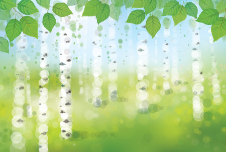 Vector birch forest bokeh background.