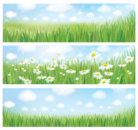 Vector summer landscapes, blue sky , meadow and chamomiles. 矢量图像