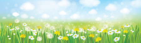 dandelion flower: Vector nature  spring background.