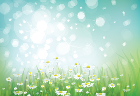 chamomiles: Vector summer nature bokeh background chamomiles field. Illustration