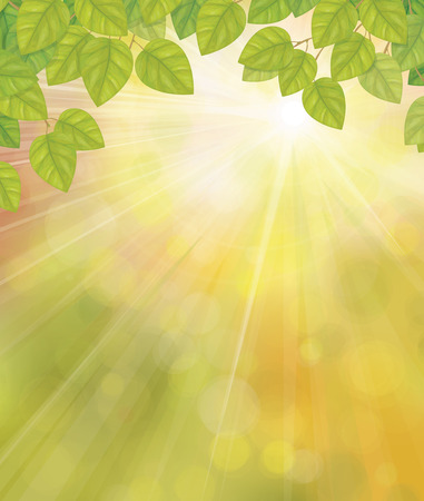 sunshine background: Vector green birchs leaves on sunshine background. Illustration