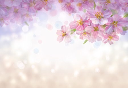 flowers bokeh: Blossoming branches of sakura tree, spring  bokeh background.