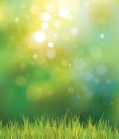 fondo para tarjetas: Vector fondo soleado de primavera con hierba. Vectores