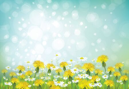 chamomiles: Vector spring background with chamomiles and dandelions. Illustration