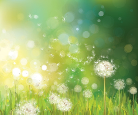 meadows: Vector of spring background with white dandelions.