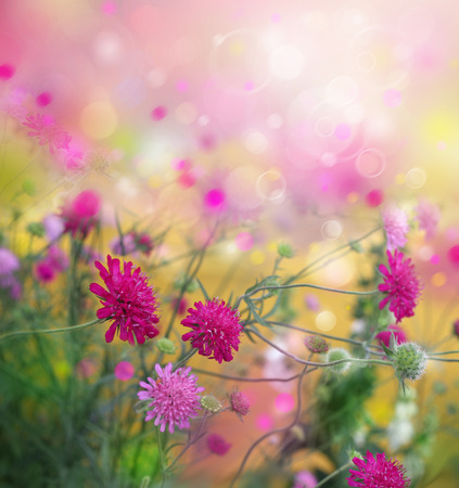 Spring flowers nature background.